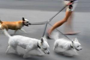 dogs-walk-fast