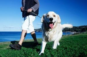 Happy dog_walking