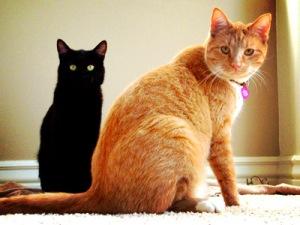 orange & black cat