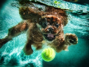 Dogs-Underwater-Game Time Dog Services, Austin