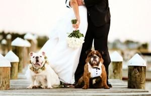 pet-in-wedding-18