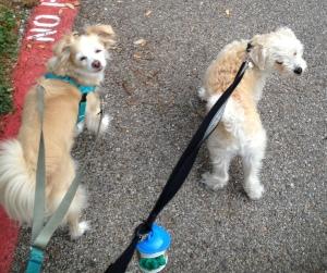 Dogs in Northwest Hills