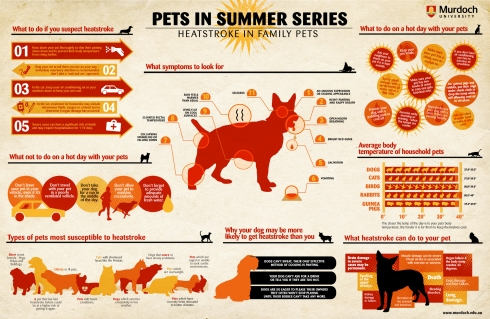Heatstroke_over heating_infograph